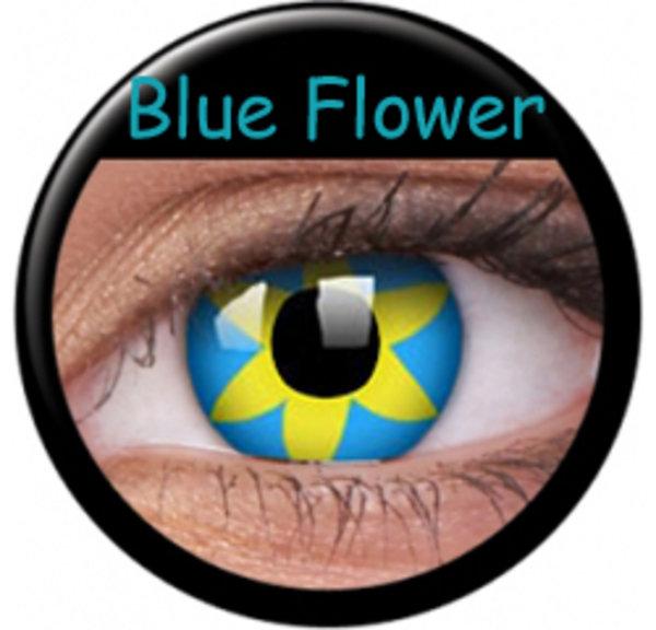 CRAZY ČOČKY  (2ks, tříměsíční) - Blue Flower
